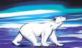 pic of polar bears  - Polar White Bear enjoys beautiful northern lights - JPG