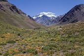 Aconcagua Valley With The Aconcagua At The Back