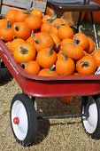 Red Wagon of Mini Pumpkins