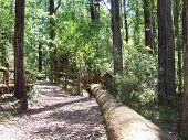 Australian Bush Track