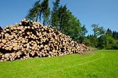 stock photo of afforestation  - The Industrial Logging in Southern Bavaria Germany - JPG