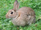 Conejo alerta