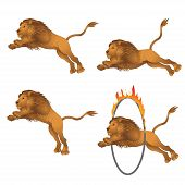 pic of lion  - Lions in the jump - JPG