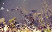Spring Frog