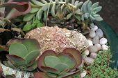 Succulent Plants In Dish Garden