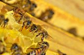 details of working bees on honeycells