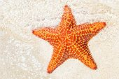 Starfish (sea star) near the sandy shore of a tropical beach