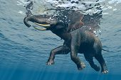 An elephant swims through the water.