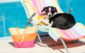 image of sunbather  - Funny female dog sunbathing on summer vacation wearing sunglasses - JPG