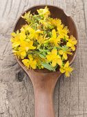 St John's wort on the wooden spoon