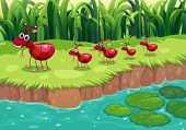 Illustration of a colony of red ants at the riverbank