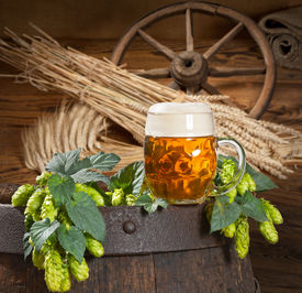 stock photo of bine  - still life with hop cones barely and gless of beer - JPG
