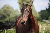Beautiful Bay Horse Portrait On Sunny Day