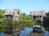 Two Grass Huts In the Jungle