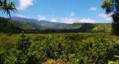 Maui Mountain Vista View