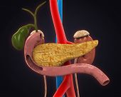 Pancreas, Gallbladder and Duodenum Anatomy