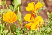 Orange flowers in sun light. Summer nature background