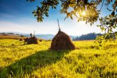 Fantastic yellow hills with blue sky. Carpathian, Ukraine, Europe. Beauty world.