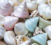 seashells background