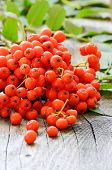 Rowanberry On The Wooden Table