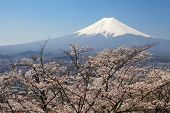 Mountain Fuji and sakura