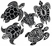 image of sea-turtles  - Tattoo reptiles - JPG