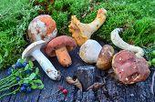 Wild Fruits And Mushrooms