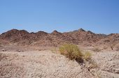 Wadi Shahamon