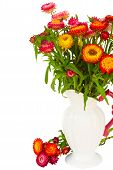 Everlasting flowers in vase