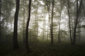 Mysterious forest with light and fog