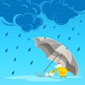 Cute little chicken under grey umbrella with blue raindrops and stylish clouds for monsoon season.