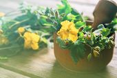 pic of celandine  - Celandine plant in mortar with pestle on wooden background medicinal herb - JPG