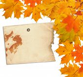 Old Grunge Paper With Autumn Maple Branch Leaves On The  White Background Isolated