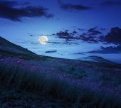 pic of moon-flower  - high wild grass and purple flowers at the top of the mountain at night in moon light - JPG