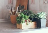 Succulents In A Wooden Box