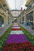 Flower Decoration  In  Store (gum). Center Of Moscow