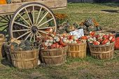 The Colors Of Pumpkin Farm