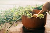 foto of pestle  - Herb capsella in mortar with pestle on wooden background side view medicinal herb