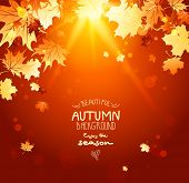 Beautiful shining autumn backdrop with falling maple leaves and sunlight. Place for text