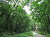 Oak Trees with Green Leaves in Summer Along Gravel Trail at Chain O Lakes State Park, Illinois