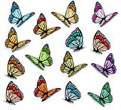 Big collection of realistic butterflies. Vector