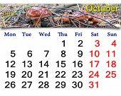 Calendar For October Of 2015 With Boletus Badius