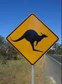 Beware of kangaroo