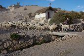 Shepherd at Work