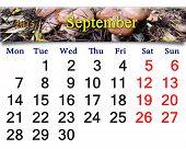 Calendar For September Of 2015 With Mushrooms