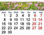 Calendar For June Of 2015 Year With Image Of Wild Carnation