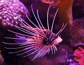 Exotic Fish In Coral Reef