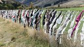 The famous bra fence in southern New Zealand. Travellers started to hang their old bras at this fenc