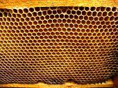 células de rodopica de APIs