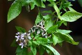 Camouflage Butterfly, Samut Sakhon, Thailand
